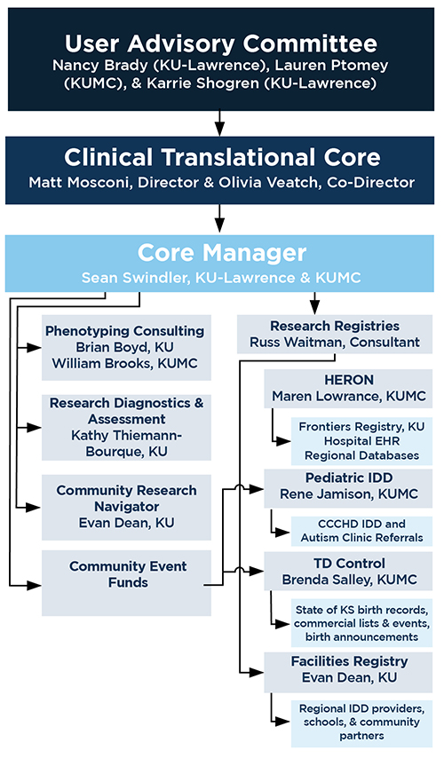 Organizational chart for the Clinical Translational Core