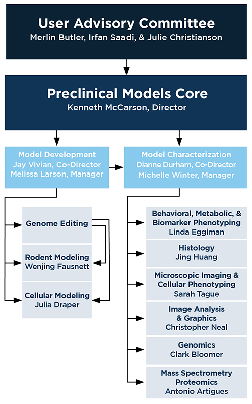 Organizational chart of the Preclinical Models Core